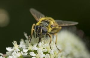 Les insectes (12)