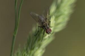 Les insectes (15)