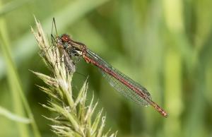 Les insectes (18)