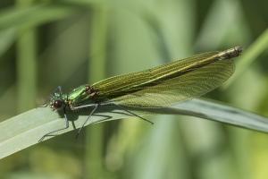 Les insectes (25)