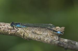 Les insectes (26)