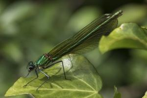 Les insectes (27)