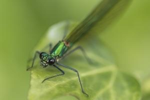 Les insectes (28)