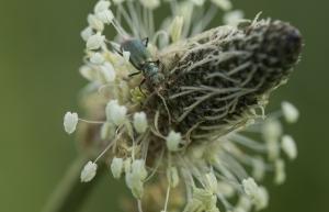 Les insectes (29)