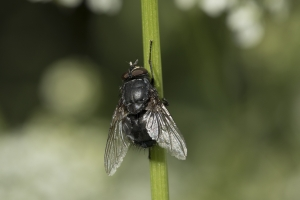 Les insectes (32)
