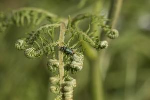 Les insectes (35)