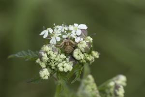 Les insectes (36)