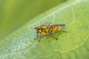 Les insectes (37)