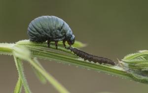 Les insectes (38)