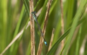 Les insectes (4)