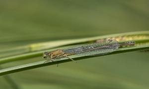 Les insectes (9)