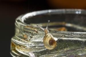 escargot 8