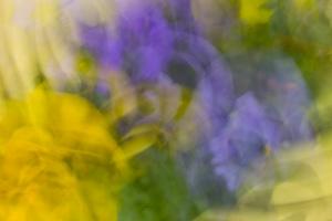 fleurs du printemps (1 sur 6)