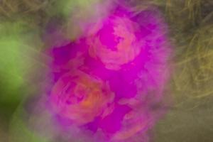 fleurs du printemps (2 sur 6)