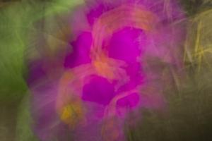 fleurs du printemps (4 sur 6)