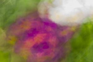 fleurs du printemps (5 sur 6)