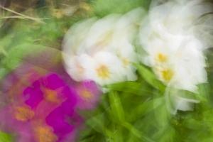 fleurs du printemps (6 sur 6)