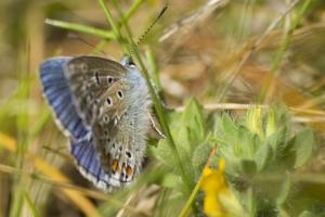 papillons bleus (19 sur 19)