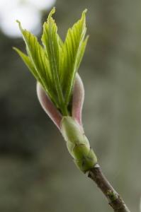 plantes (11 sur 19)