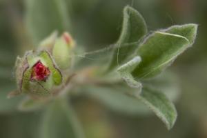 plantes (9 sur 19)