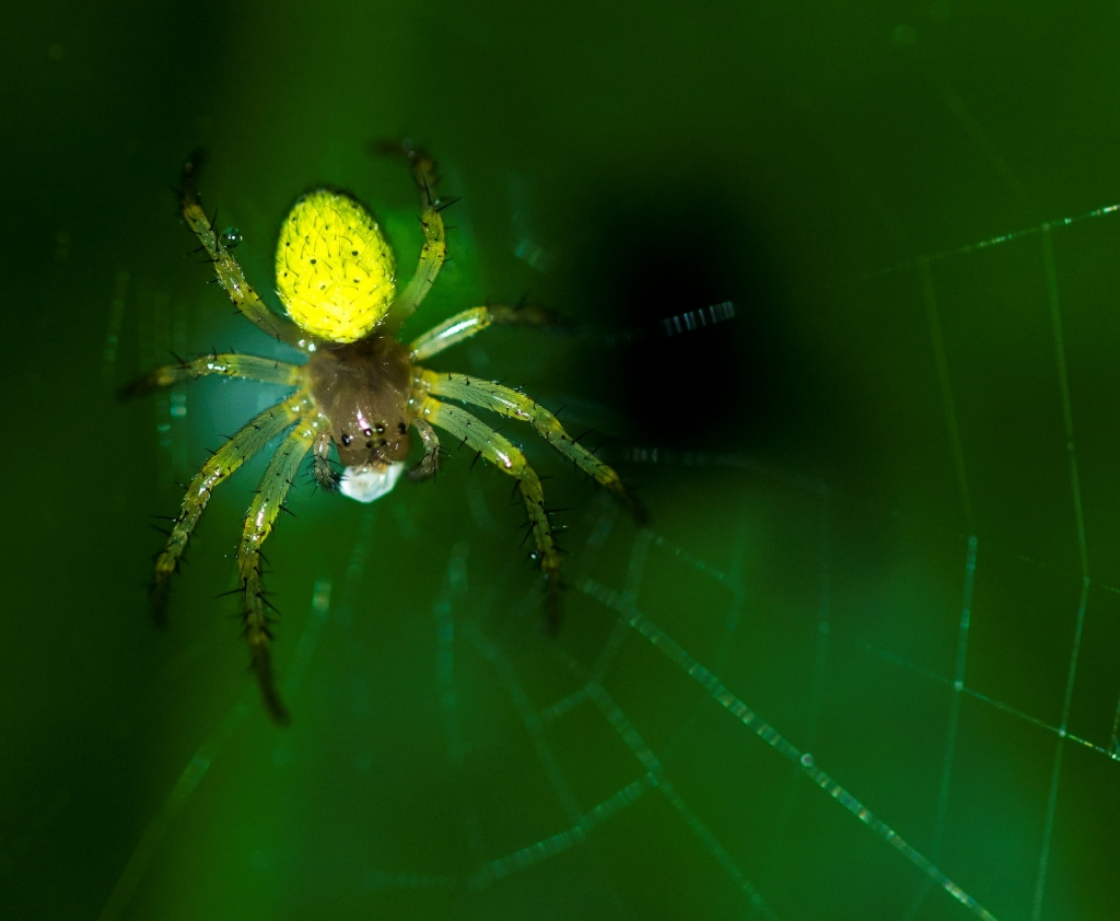 araignée du soir (espoir) (Copier)