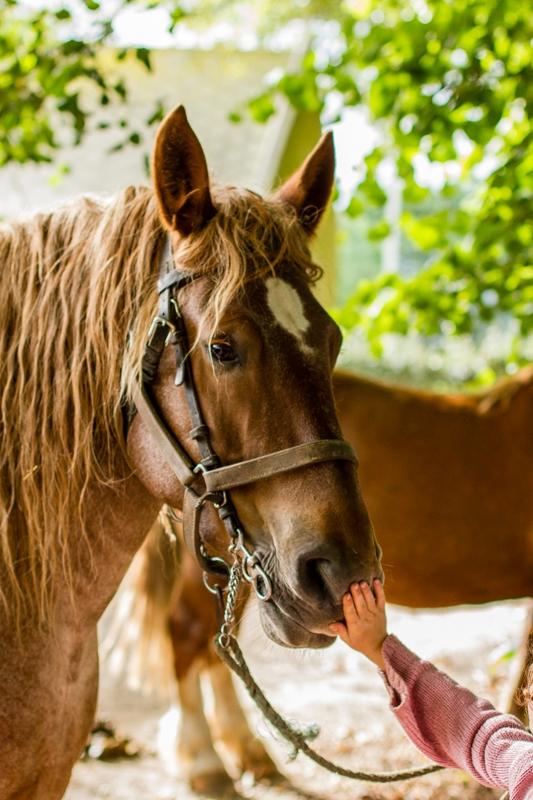fete du cheval  beuzec-1