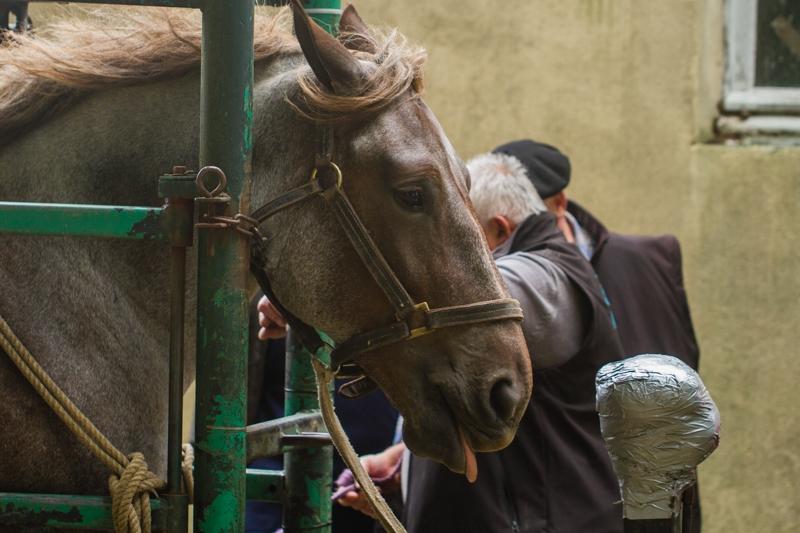fete du cheval  beuzec-2