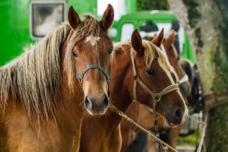 fete du cheval  beuzec-3