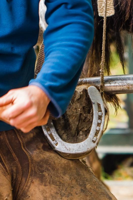 fete du cheval  beuzec-4
