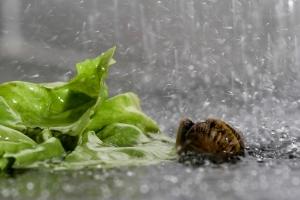 Escargot (3 sur 10)