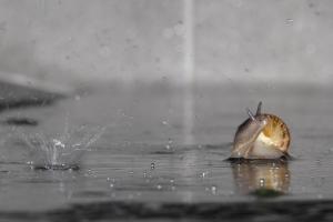 Escargot (7 sur 10)