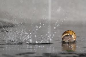 Escargot (8 sur 10)