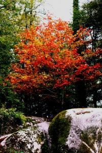 arbre couleur automne