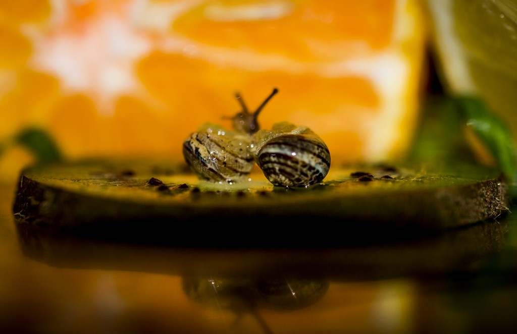 escargot sur son lit de kiwi, au zest d'orange (Copier)