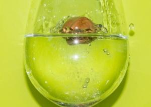 flotter comme une coquille de noix-0361