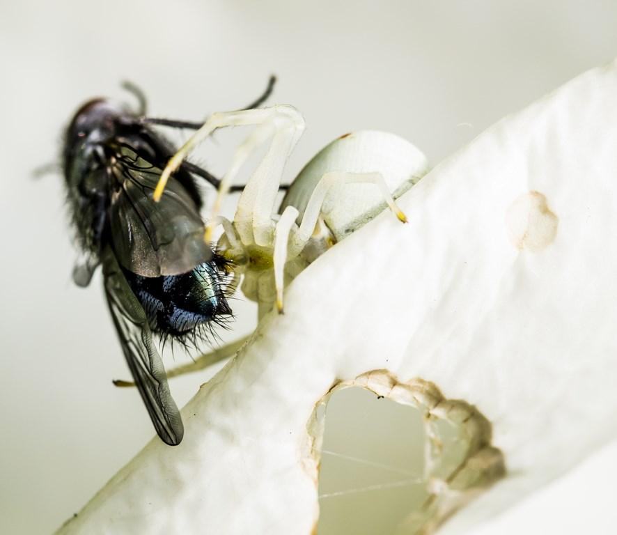 mouche et araignée-3 (Copier)