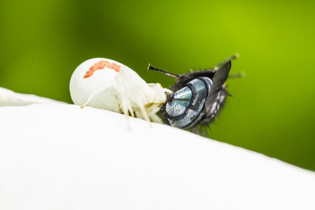 mouche et araignée-5 (Copier)