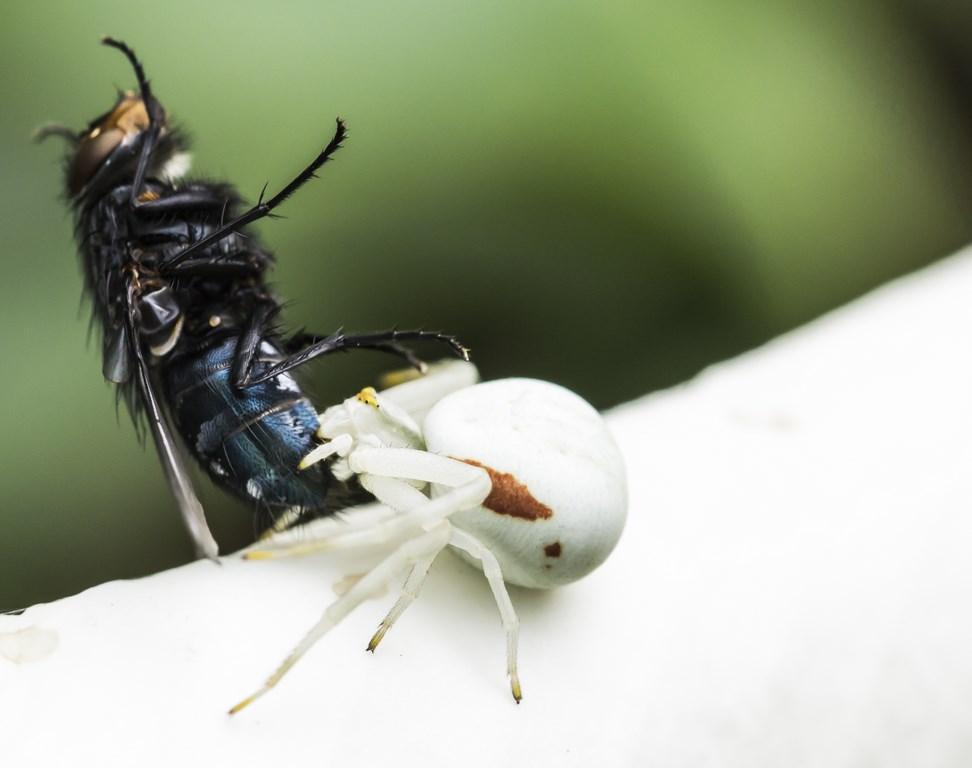 mouche et araignée (Copier)